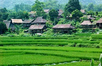 Ecological Trekking Tour Cuc Phuong National park - Mai Chau 3days